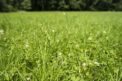 Walking in the meadiws. Green meadows are truly relaxing Stock Photos