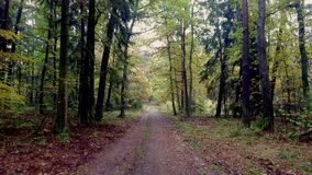 Walking in the middle of forest full of colourful trees in autumn stock footage
