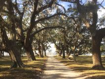 Walking between the Mighty Oaks. Mighty Oak trees, with Spanish Moss hanging in them, create a canopy over a dirt path stock photo