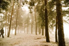 Walking in misty forest. Perspective of misty forest with man walking by Stock Image
