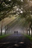 Walking in the morning 3. Walking under the trees in the morning mist Royalty Free Stock Images
