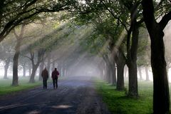 Walking in the morning 4. Walking under the trees in the morning mist stock photos