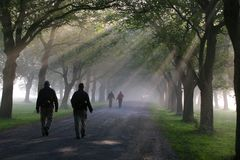 Walking in the morning. Walking under the trees in the morning mist royalty free stock image