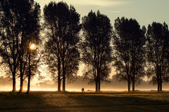 Walking in the morning sun 1. Walking under the trees in the morning mist Royalty Free Stock Images