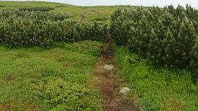 Walking on mountain path stock video