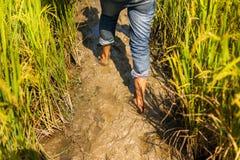 Walking through mud Stock Photography
