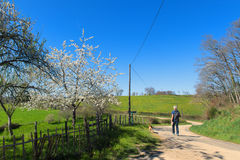 Walking in nature. Man and dog walking in nature in spring Royalty Free Stock Photography