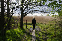 Walking in nature at spring Stock Photography