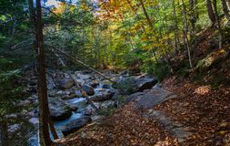 Walking in the New England autumn woods and coming to a tranquil setting of a stream, trees and light. stock photo