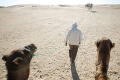 Walking Nomad. Douz, Kebili, Tunisia - September 17, 2012 : Beduins leading tourists on camels at the Sahara desert on September 17, 2012 in Douz, Kebili Stock Images