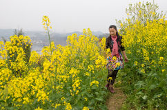 Walking in oilseed rape flowers Royalty Free Stock Image