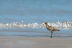 Free Walking On The Beach. Stock Photo - 94445680