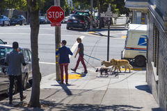 Walking the pack/array of dogs by a young man in Haight Ashbury area of San Francisco, California USA stock image