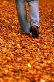Walking through park Royalty Free Stock Image