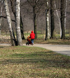 Walking in a park. Woman walking with pram in a park royalty free stock image