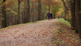 Walking in the park in the autumn stock footage