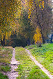Walking in the Park with The Brilliant Colors Of Autumn Stock Photo