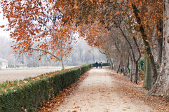 Walking in the park in a foggy autumn day Royalty Free Stock Photos