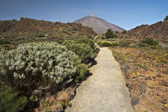 Walking pass in Tenerife national park via Mount Teide. At background Royalty Free Stock Image