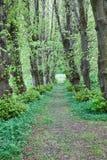 Walking path Royalty Free Stock Images