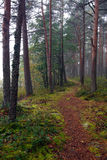 Walking path. In the autumn forest Stock Photos