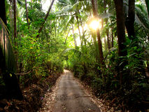 Walking the Path. A beautiful path in Indian tropics Royalty Free Stock Photography