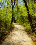 Walking path. Through the woods in springtime Royalty Free Stock Photography