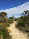 Walking path across grass and drought tolerant plants with blue. Walking path across grass and drought tolerant plants with green gray branches with blue sky Stock Photos