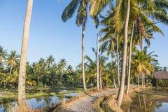 Walking path along rice paddies near Ubud in Bali Royalty Free Stock Photo