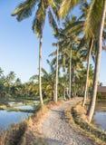 Walking path along rice paddies near Ubud in Bali Royalty Free Stock Photos