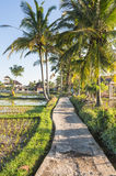 Walking path along rice paddies near Ubud in Bali Stock Photos