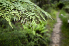 Walking Path in the Australian bush Stock Images