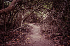 Walking path in autumn forest Royalty Free Stock Photography