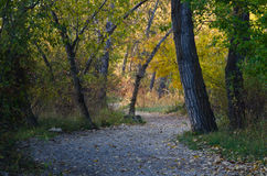 Walking Path Through the Autumn Forest Royalty Free Stock Photography