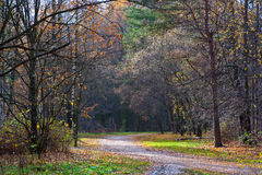 Walking path in autumn park Royalty Free Stock Images