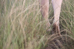 Walking the path barefoot Stock Photography