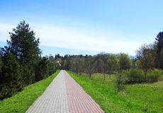 Walking path and beautiful trees, Lithuania Royalty Free Stock Image