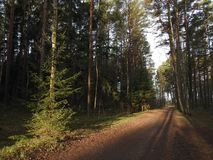 Walking path and beautiful trees, Lithuania Royalty Free Stock Images