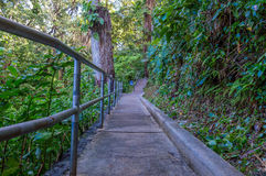 Walking Path Botanical Gardens Stock Images