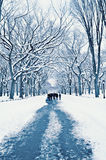 Walking on a Path in Central Park in Winter Stock Photos