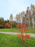 Path and colorful autumn trees, Lithuania stock images
