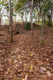 Walking path. Cover with dry leaf Royalty Free Stock Photo