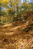 Walking path covered with golden maple leaves. Forest autumn scene Royalty Free Stock Images