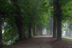 Walking path with diverse selection of trees on both sides. With the morning mist in Toompark, Tallinn, Estonia stock photography