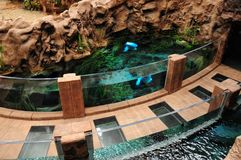 Walking path, with fish tank. Poema del Mar, Aquarium, Las Palma. S Royalty Free Stock Photography