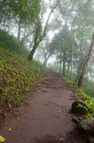 Walking path. A foggy walking path in the mountain Stock Image
