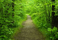 Walking path in the forest. Walking path in the summer forest Royalty Free Stock Photos
