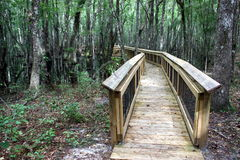 Walking path through forest. Wooden walking path through forest in the Apachicola National Forest, Leon Sinks, in Florida Royalty Free Stock Images