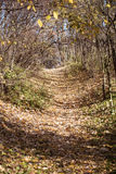 Walking Path in Forest in Autumn. Stock Photo