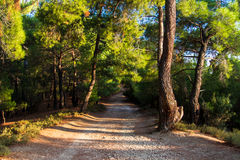 Walking Path in Forest Royalty Free Stock Image